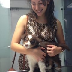 כיצד נוריד מתח בכלבים וחתולים בזמן ביקור אצל הוטרינר
