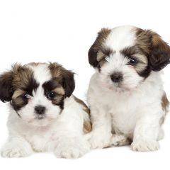 """גור כלבים חדש בבית- וטרינר במרכז- ד""""ר אוהד טילס מרקוס"""