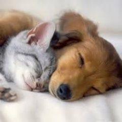 אלרגיה למזון בכלבים וחתולים לעומת אלרגיות עונתיות\אטופיק דרמטיטיס