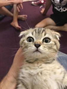 הרעלה מטיפול בפרעושים בחתולים