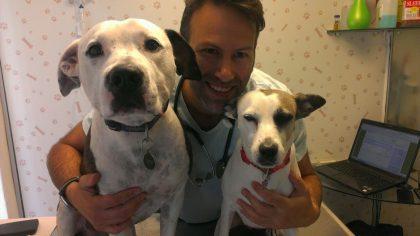 קדחת קרציות בכלבים בישראל-ארליכיה