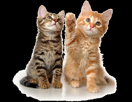 """גור חתולים חדש בבית- וטרינר במרכז, ד""""ר אוהד טילס מרקוס-וטרינר תל אביב"""