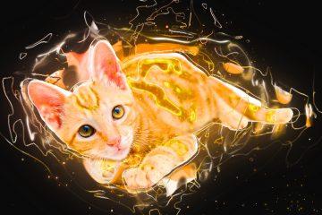 """החתול שלי מקיא- ד""""ר טילס וטרינר בתל אביב"""