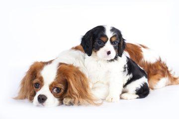 """סירוס בכלבים-וטרינר במרכז ד""""ר אוהד טילס מרקוס"""