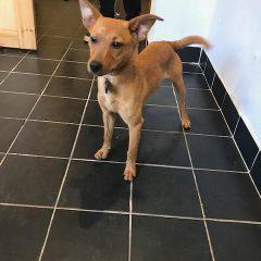 מחלת אדיסון בכלבים- וטרינר נייד תל אביב והסביבה, וטרינר עד הבית, וטרינר ביקור בית